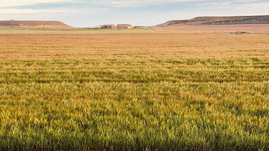 La agricultura y la fotovoltaica pugnan por su desarrollo en Fraga