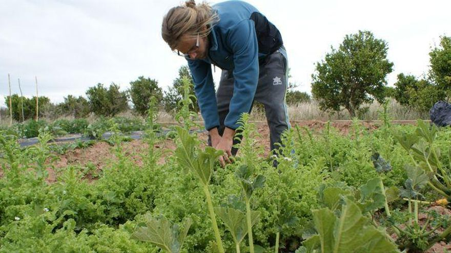 La agricultura ecológica da un salto en Castellón  con más cultivos y más productores