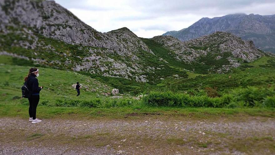 Cangas de Onís impulsa un plan para recuperar zonas de pasto en varios puntos del municipio