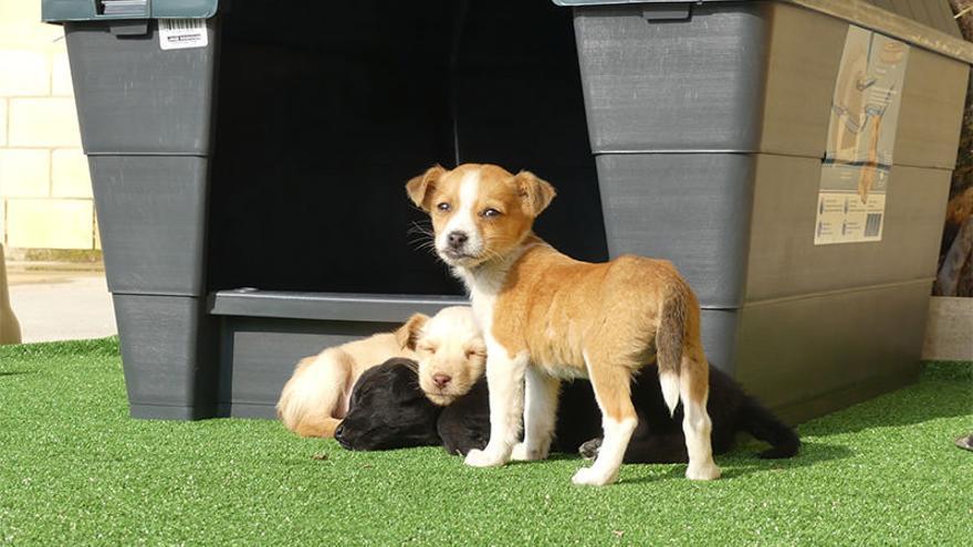 Compromís insta a agilizar la instalación del albergue de animales en San Vicente