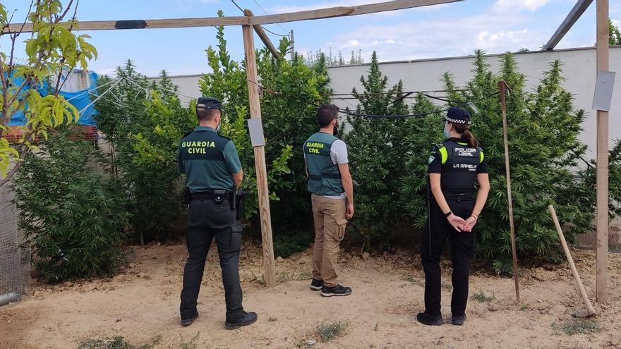 Desmantelada una plantación de marihuana en La Rambla