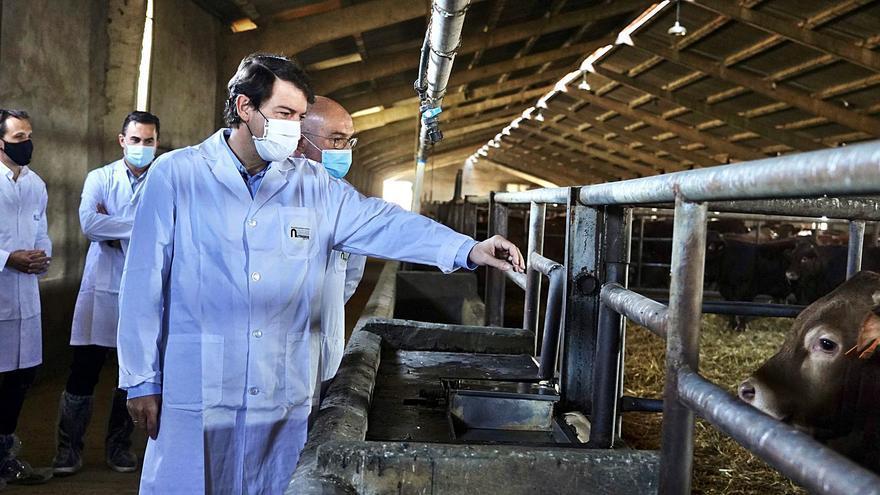 Mañueco se compromete a defender  las ayudas del vacuno en la nueva PAC
