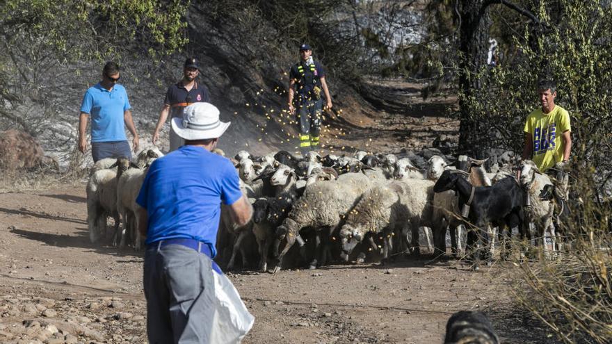 Escapando del fuego con los animales