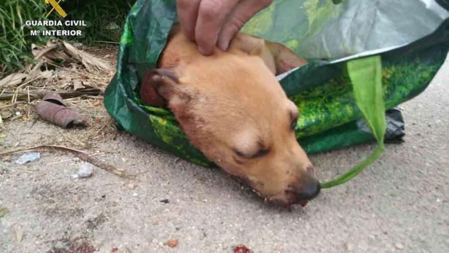 Halbtoter Welpe in Müllcontainer: Polizei fasst Tierquäler