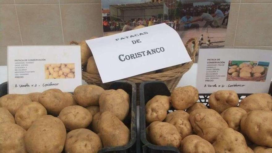 La Xunta refuerza el control en A Costa da Morte tras detectar la plaga de la patata en Muxía