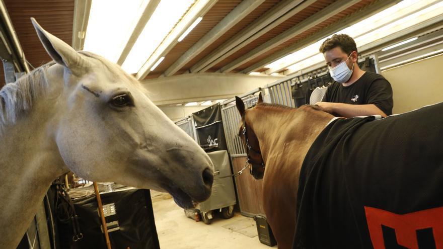 Los caballos del Chas, en cuarentena por el brote nacional de rinoneumonitis