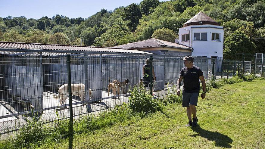El albergue de animales de Langreo tendrá un módulo para evitar sacrificar perros agresivos