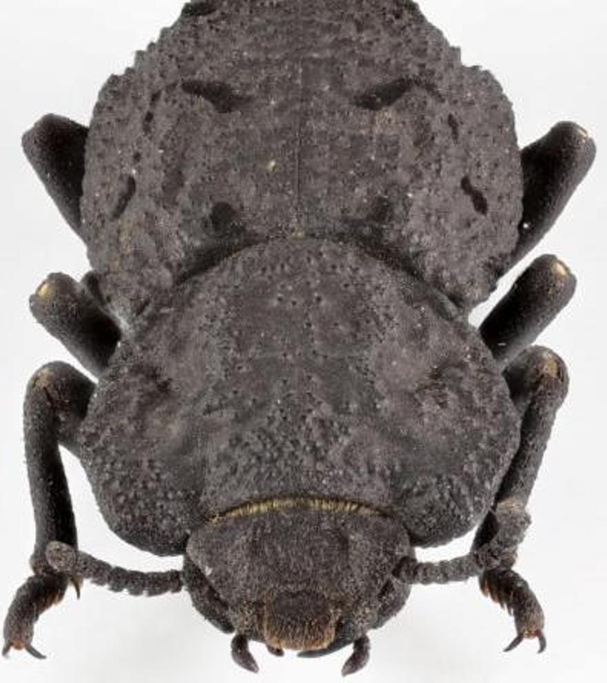 Resuelto el misterio del insecto indestructible