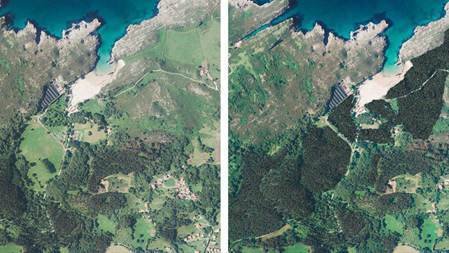 Debate vecinal sobre el proyecto para plantar 18 hectáreas de eucalipto en Cuevas del Mar