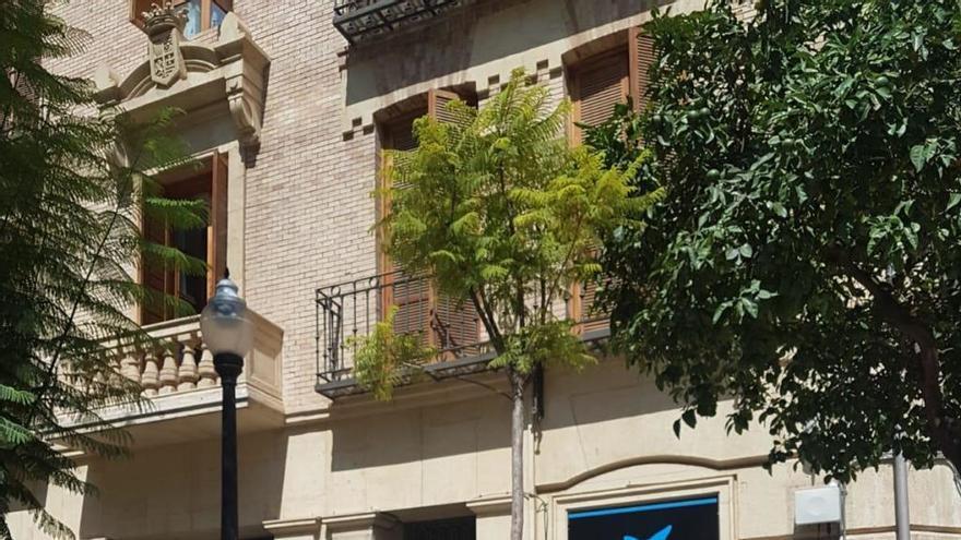 Dos informes técnicos avalan la tala de jacarandas en la plaza Santa Catalina