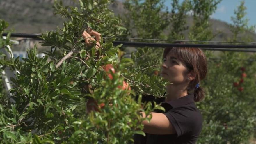 La agricultura ecológica se dispara en la Comunitat Valenciana