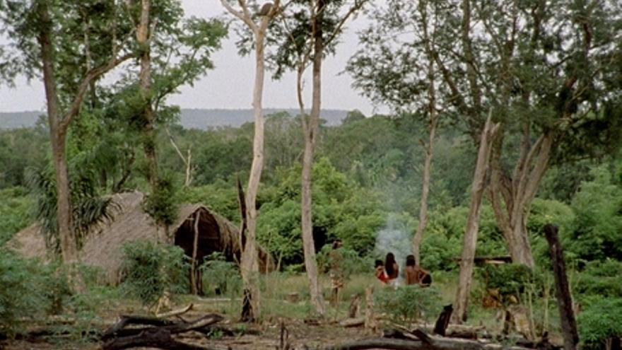 El canto de la selva