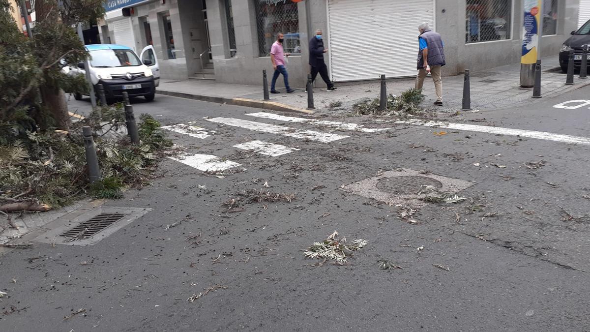 Ramas y árbol caído en La Naval, en Las Palmas de Gran Canaria.