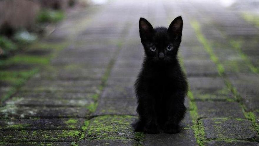 El sacrificio de animales en Halloween frena las adopciones en octubre