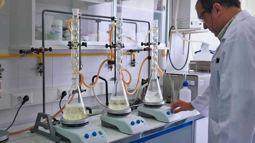 El ocle extraído por buzos en aguas asturianas, una farmacia inagotable