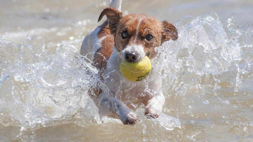 A mi perro le chiflan las pelotas