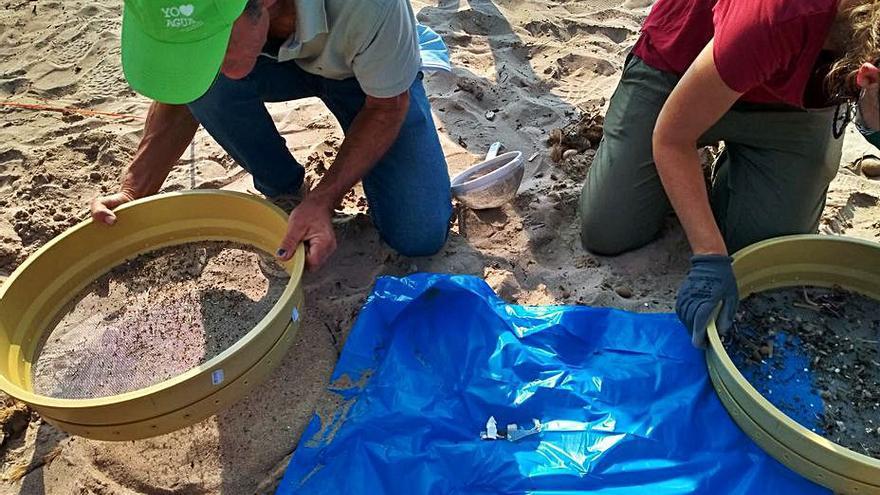 Cientos de microplásticos en tan solo 2 m2 de la playa en El Campello