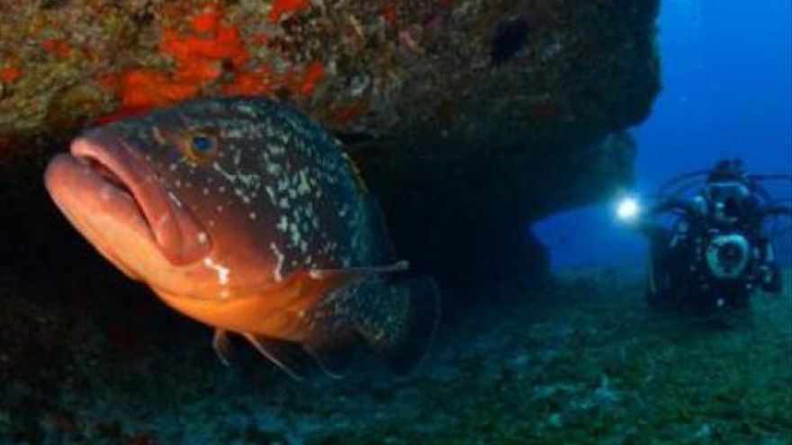 El Hierro, presente en el Día Mundial de los Océanos