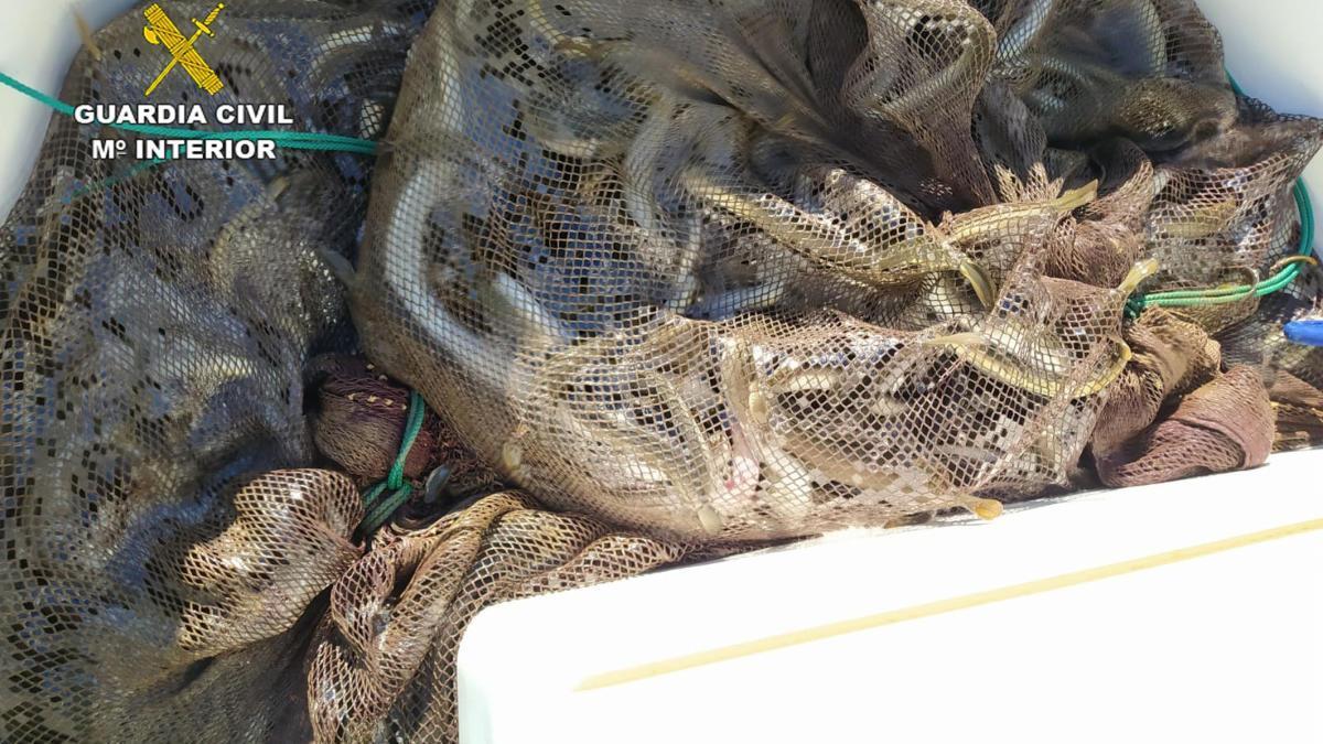 Sorprendidos pescando ilegalmente 180 kilos de anguila en el Mar Menor
