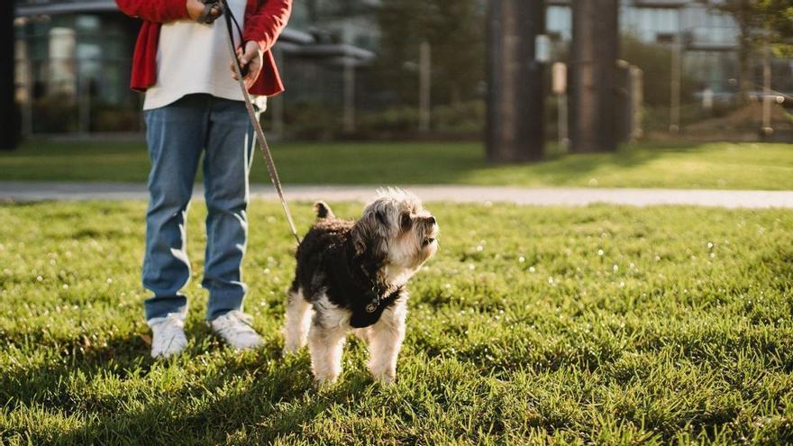 Curso para tener perro: todo lo que se sabe de la nueva formación obligatoria