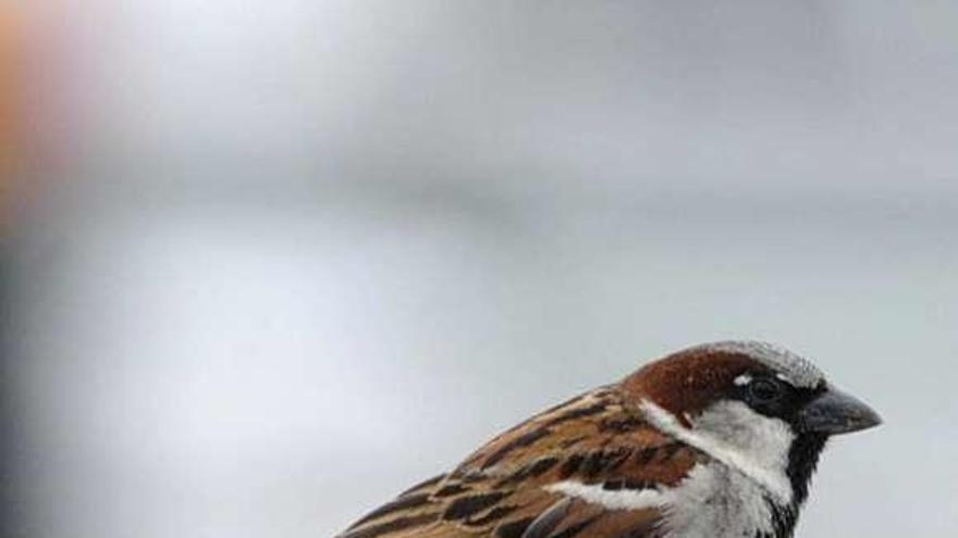 La agachadiza y el ave fría, dos aves que están en peligro de extinción en Ourense