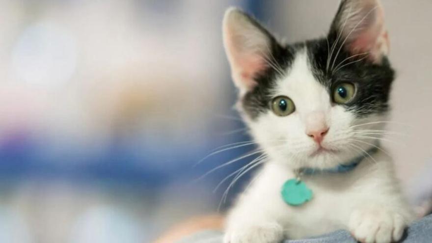 Descobreixen els cinc tipus de relació entre gats i amos: quina és la teva?