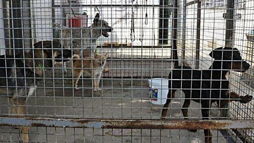 La nueva perrera de Zamora contará con cinco naves para animales