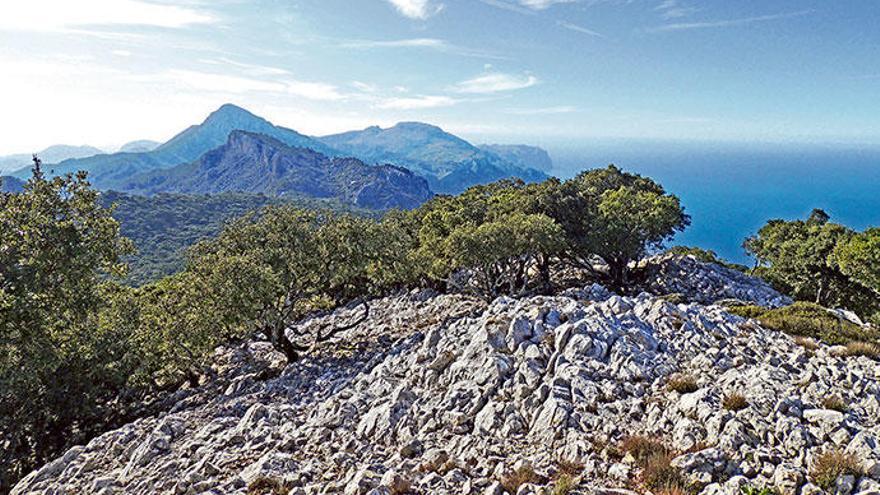 Durch das Revier der Köhler auf Mallorca wandern