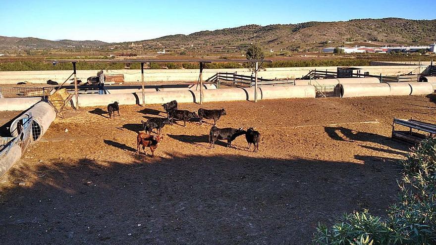 Alfarp lleva la granja al fiscal al incumplir la orden de clausura