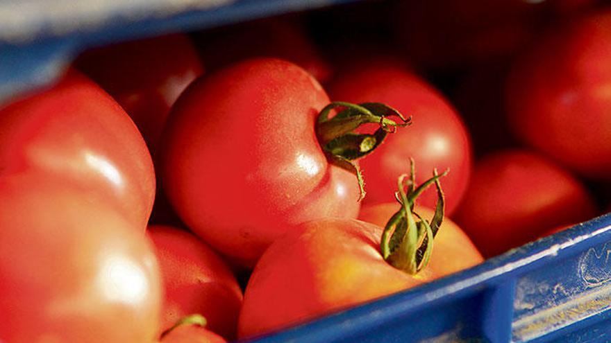 Wo die Tomaten von Mercadona herkommen