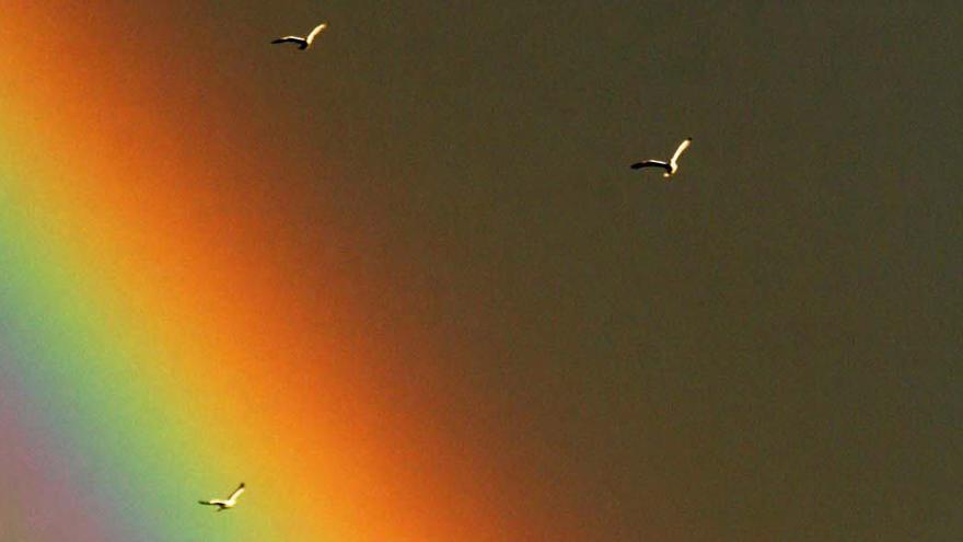 El extraño fenómeno que sorprendió el jueves en el cielo de Elche