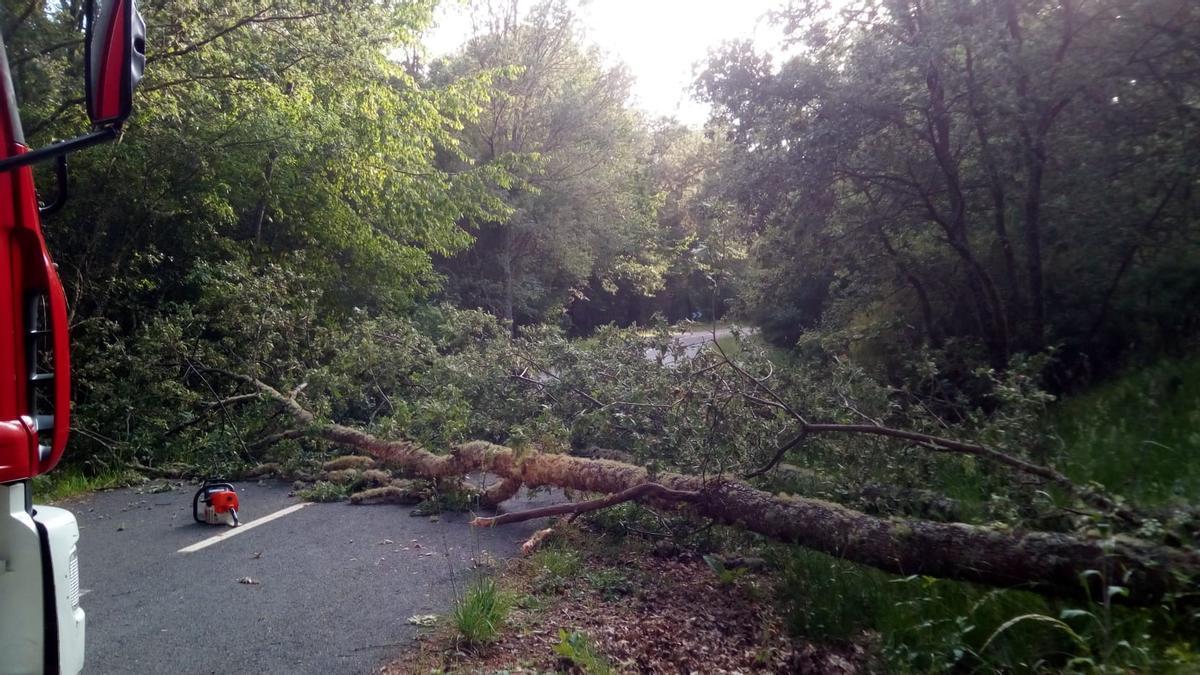 Los bomberos retiran el árbol de la carretera cortada.