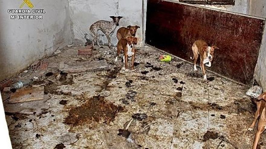 Hallan en una finca de Madrid 22 perros maltratados y restos cadavéricos de siete