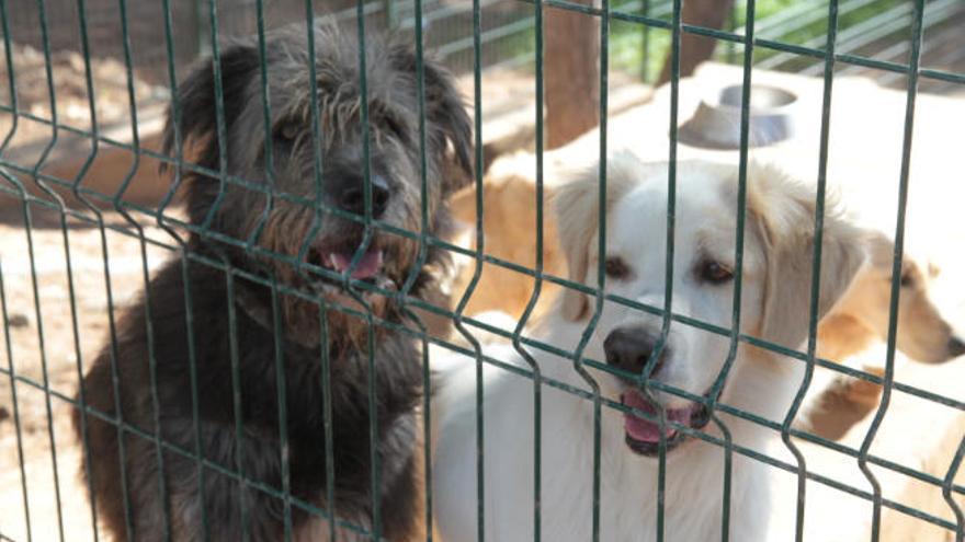 Balearen-Regierung will Tötung von verlassenen Haustieren verbieten