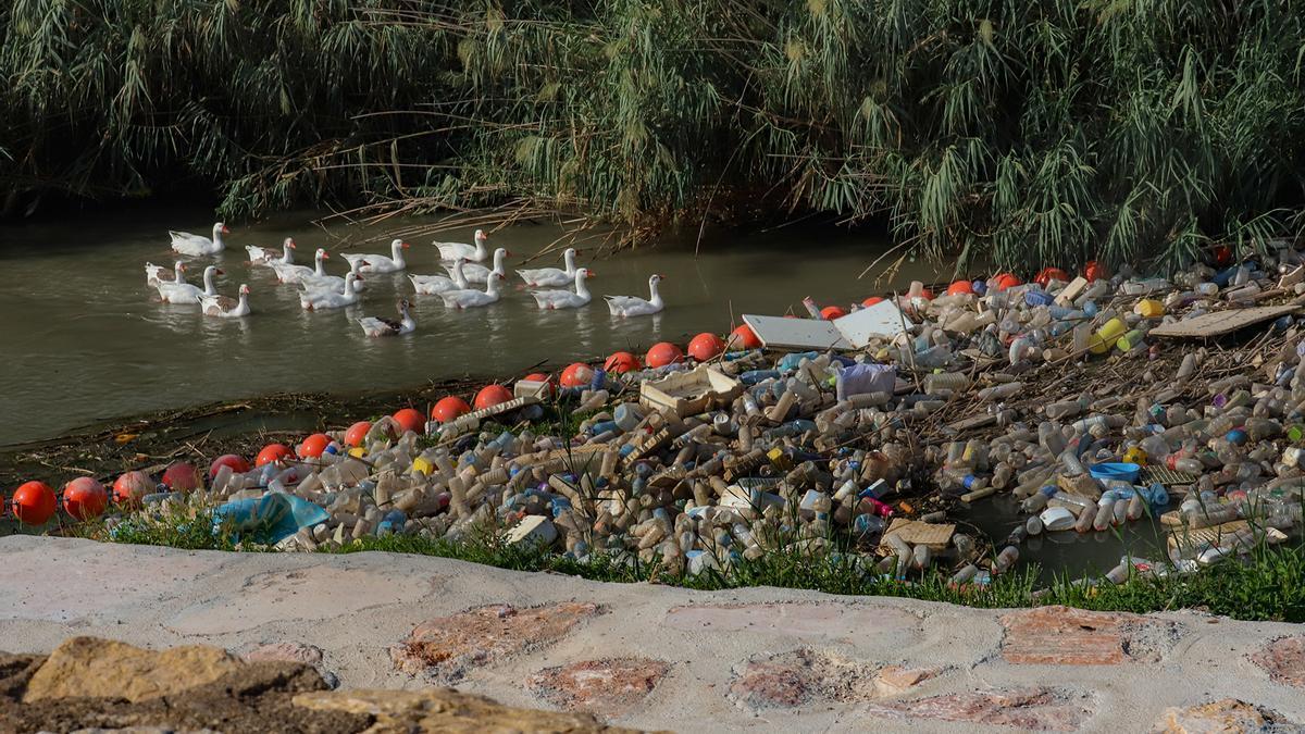 Imagen tomada ayer a las 14 horas de la basura acumulada en la barrera de flotantes en la entrada del cauce urbano del río en Orihuela.
