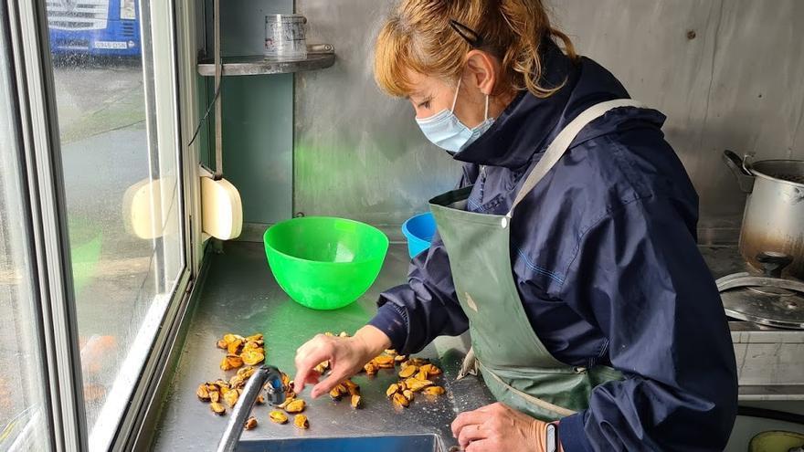 Pandemia y biotoxinas ralentizan el ritmo de crecimiento de Mexillón de Galicia