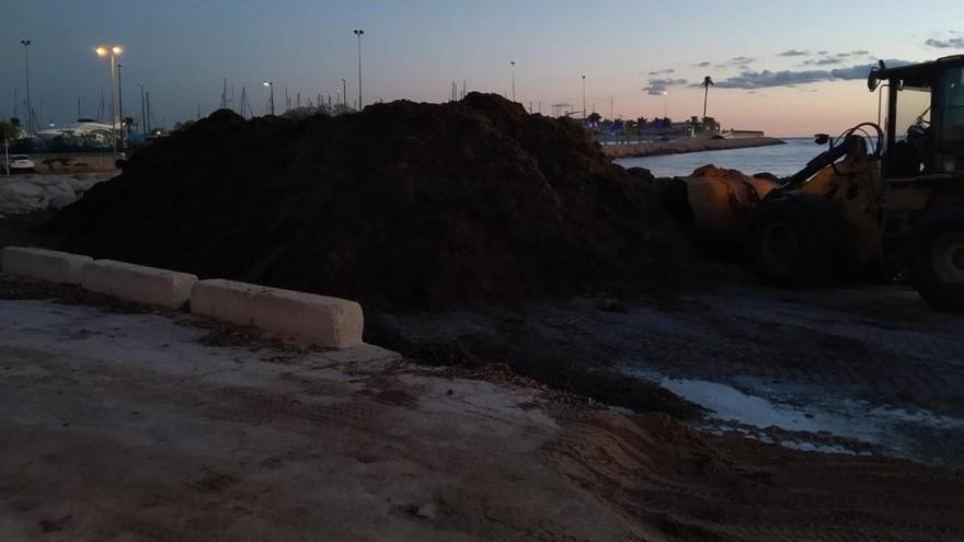 Dénia retira en una noche 900 toneladas de arribazones de posidonia