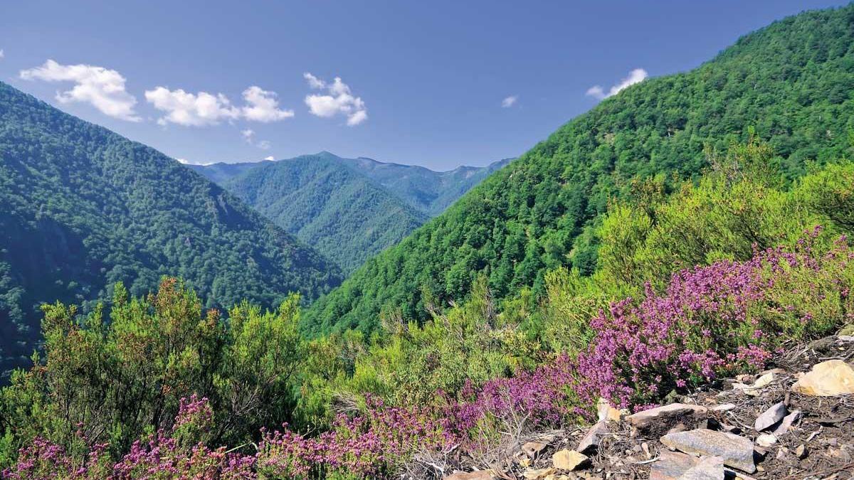 La reserva de Muniellos, joya del suroccidente asturiano.