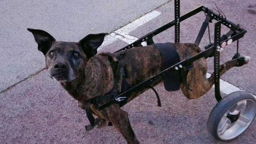 Denuncien el sacrifici «il·legal» d'un gos per part d'un veterinari