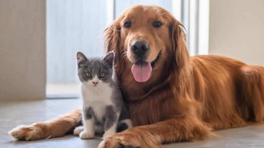Los animales dejarán de ser 'cosas' con la nueva ley del Gobierno