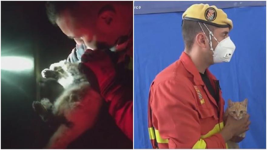 Salva a un gato en La Palma haciéndole el boca a boca y lo adopta