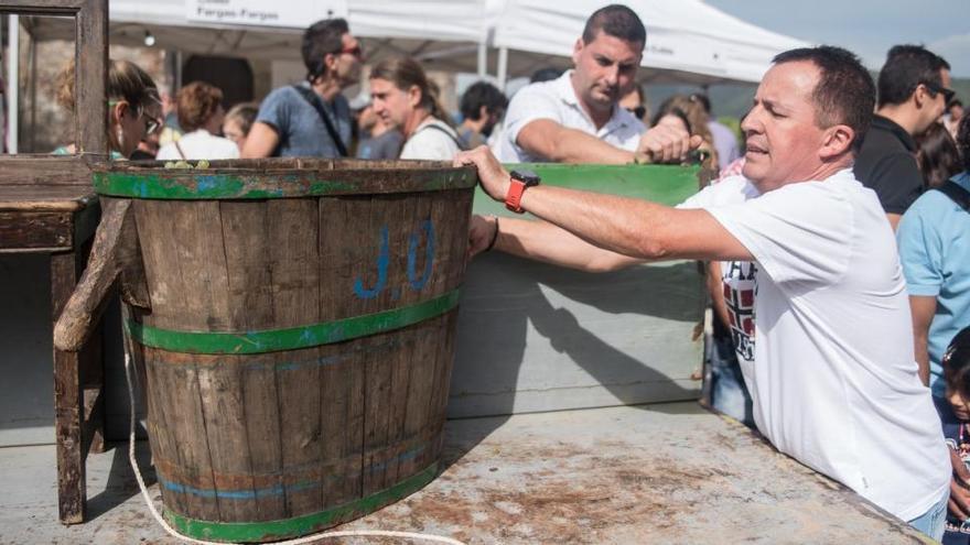 La Festa de la Verema tindrà una trentena d'actes repartits entre tretze municipis