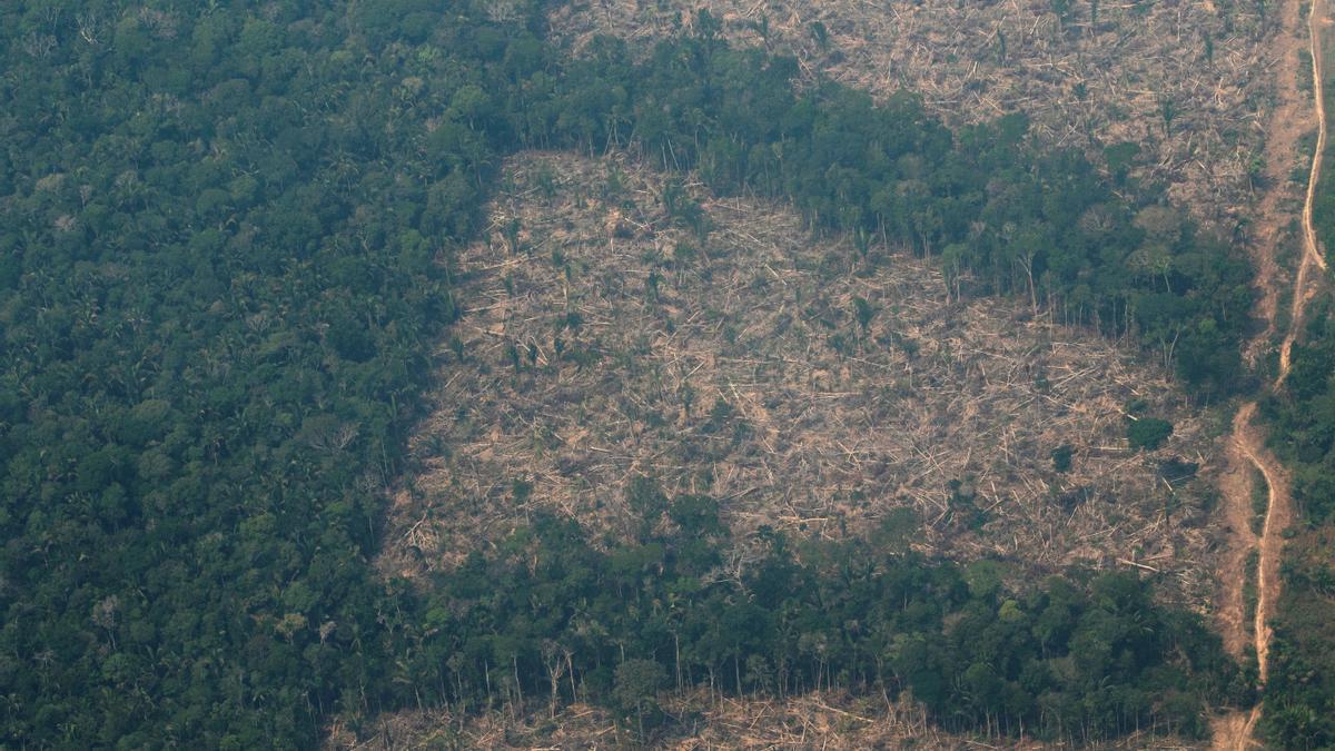 La deforestación en la Amazonía brasileña rompió el récord en abril.