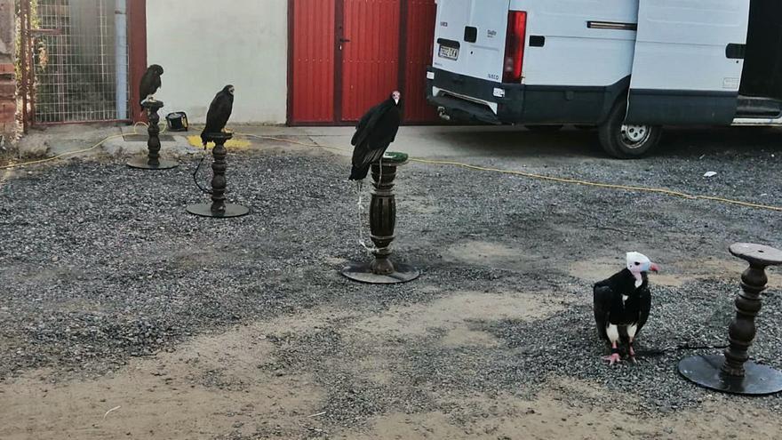 Las aves de presa aterrizan en Fuentes del Ropel