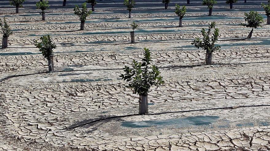 La desertifIcación, el enemigo  silencioso que a nadie importa