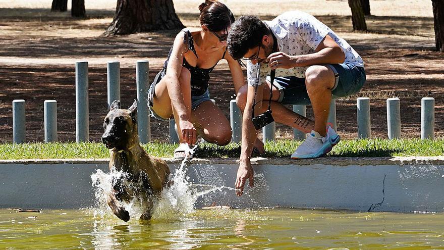 Los animales también sufren la ola de calor: charla con el Sindicato de Veterinarios de Zamora