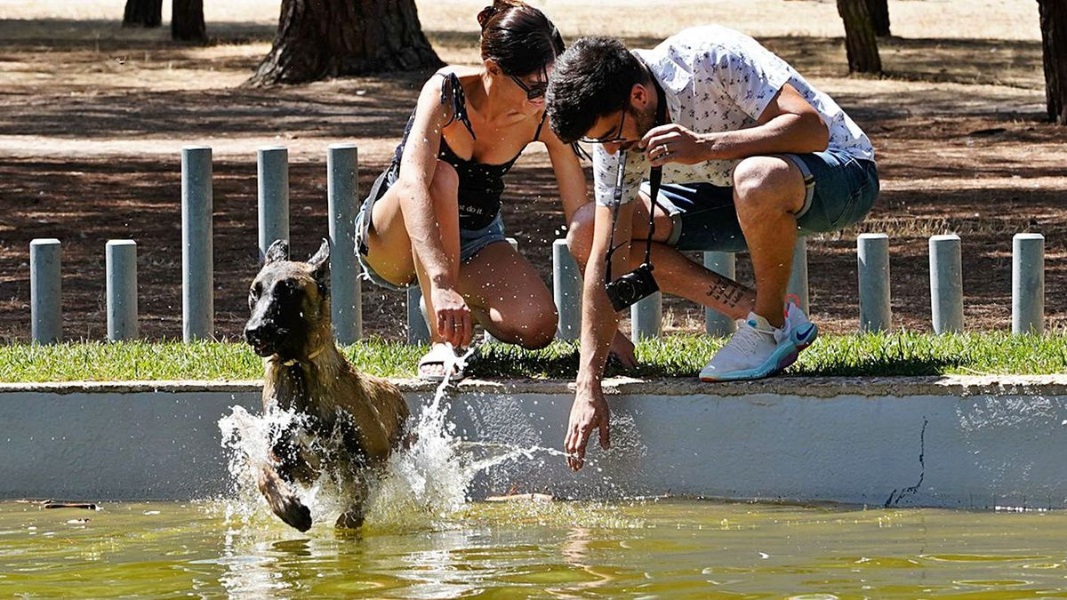 Un perro se refresca en un estanque de la ciudad.