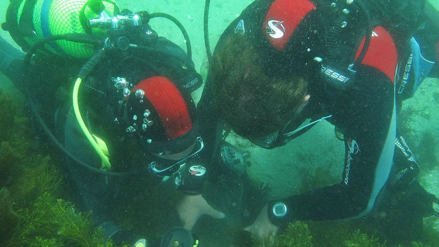 """El """"CSI del mar"""" regresa a Islas Atlánticas"""