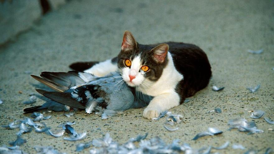 5.000 euros para los gatos callejeros de Zamora