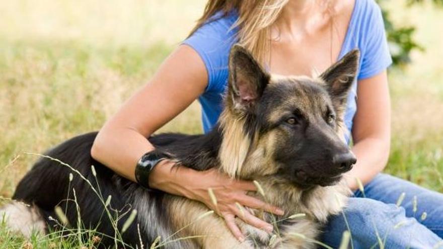 Este municipio de Castellón estrena una terapia con perros para mujeres maltratadas